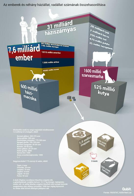 qubit állatok világnapja