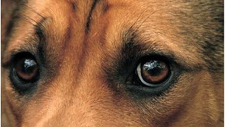 Elképesztő kegyetlenséggel akart megszabadulni kutyáitól egy idős férfi