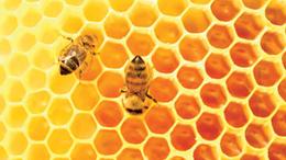 Szenzáció! Megtalálták a méz titkos összetevőjét
