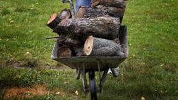 Talicskával lopta a fát egy kaposvári erdőből