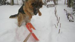 Frissítve!!! Kutyaidő - vagy mégse? - a fotókat olvasóink küldték!