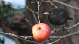 Szomjaznak a somogyi madarak - videóval