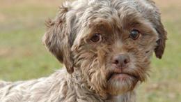 Gazdát keres az emberarcú kutya