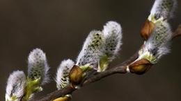 Ma van Virágvasárnap