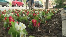 Százezer virággal pályázik Kaposvár