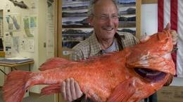 Több mint kétszáz éves hal akadt  horogra