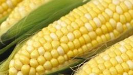 Kukoricatermelésben az élen