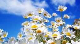 Újra tavasz, újra Tavaszi Fesztivál!