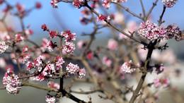 Napsütéssel köszönt be a tavasz