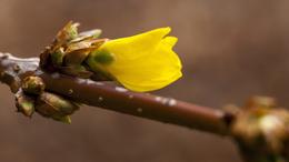 Esővel indul a tavasz, avagy ilyen időnk lesz a hétvégén