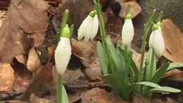 A tavasz hírnökei Somogyban