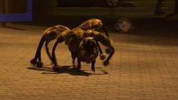 Látott már mutáns pókkutyát? Nem? Na, ne!
