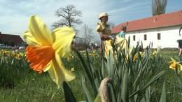 Virágba borult a Rippl-Rónai villa