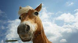 Meglett az eltűnt ló!