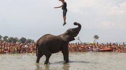 Látott már elefántot a Balatonban?