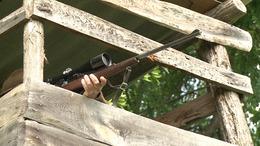 Ellopták a vadászok által kilőtt szarvasokat