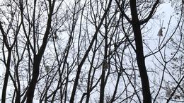 Kellemetlen csomagok a fa tetején