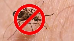 Folytatódik a szúnyogirtás