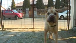 Még mindig sok a szilveszterkor elveszett kutya