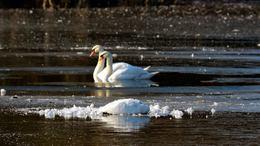 Segítséget kér Magyarország a madárinfluenza miatt