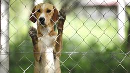 Több állateledelt is visszahív a forgalomból a Fressnapf