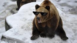 Bréking! A medvék szerint jön a tavasz!