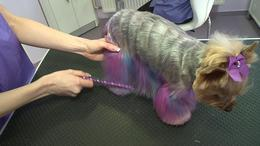 Új őrület hódít a kutyatartók körében