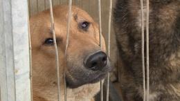 Németországban leltek otthonra a kaposvári kutyák