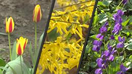 Most már a növények is úgy gondolják, hogy itt a tavasz