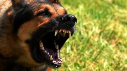 Kutyatartók figyelem: kötelező a veszettség elleni oltás!