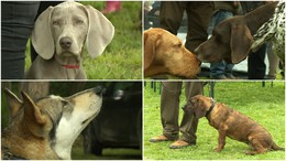 Szebbnél-szebb kutyák Kaposváron