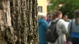 Fák, madarak, virágok: városnézés extrákkal