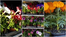 Virágvásárra jöjjenek!