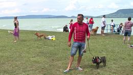 Ellepték a kutyusok a fonyódi strandot