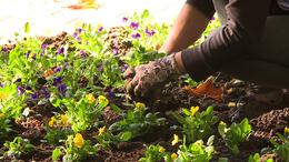 Pénteken és szombaton virágvásár lesz Kaposváron
