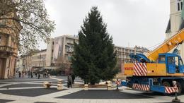 Tűzifa lesz a város karácsonyfájából