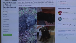 Több tucat kutya rohant világgá Somogyban szilveszterkor