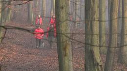 Figyelmeztet az erdőgazdaság