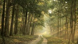 Erdőlátogatási tilalmat vezetnek be Somogyban