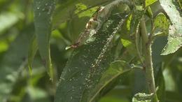 Mik ezek az apró fekete bogarak a városban?