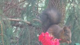 Benézett a mókus az ablakon
