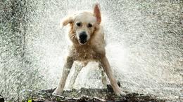 Kutyameleg van: óvjuk meg a hőgutától kedvenceinket!