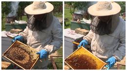 Nem tudni még, mi okozza a nagy mértékű méhpusztulást