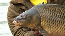 Népszerű horgászcélpont a Deseda