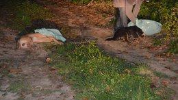 Kutyatetemeket találtak a sántosi szőlőhegyen