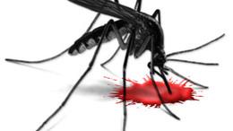 Mégis lesz szúnyogirtás a Balatonon