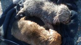 Merítőhálóval mentették meg a kiskutyákat