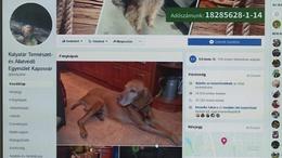 Eltűnt kutyák képei lepték el az internetet