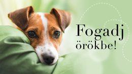 Kutyák örökbefogadását segíti a Nébih