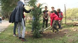 Faültetéssel ünnepelték a kaposvári távfűtést
